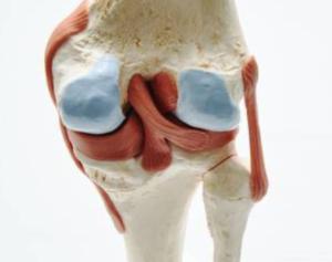 Acuut meniscus letsel l Fysio Jansen Deurne
