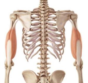 Triceps tendinopathie l Oorzaak en behandeling l Deurne