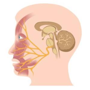 Aangezichtspijn l Trigeminus Neuralgie l Oorzaak en behandeling