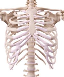 Costochondritis l Oorzaak en behandeling l Deurne