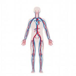 Vaatlijden l Oorzaak en behandeling l Fysio Deurne