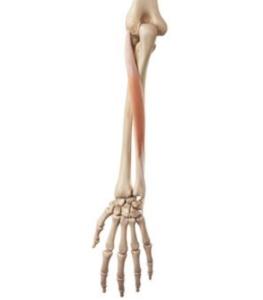 Extensor carpi ulnaris tendinopathie l Oorzaak en fysiotherapie