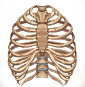 Dysfunctie van de ribgewrichten   Oorzaak en behandeling